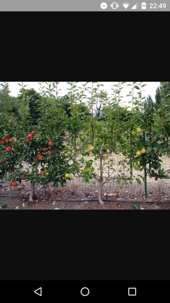 Et si sur les quais, il y avait des arbres, de la verdure, ou même des arbres fruitiers, arrosés automatiquement par récup de l'eau de pluie