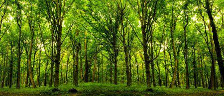 Et si Allianz participait à la lutte contre le réchauffement climatique, en plantant un arbre pour chaque nouveau contrat d'assurance obtenu dans ses filiales chaque année, particulièrement les pays les plus touchés par la sécheresse.